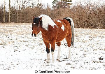 επάνω , ένα , κρύο , χειμώναs , ημέρα , μέσα , όμορφος , άλογο αγγίζω ελαφρά
