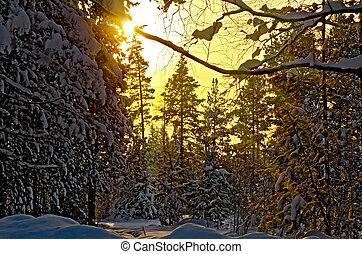 επιφανής ακτίνα , δύση , χειμώναs , δάσοs
