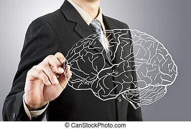 επιχείρηση , διάγραμμα , εγκέφαλοs , ανθρώπινος , ζωγραφική , άντραs
