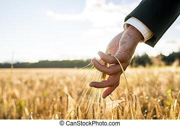 επιχειρηματίας , αφορών , ένα , αυτί , από , ωρίμαση , σιτάρι