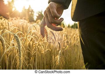 επιχειρηματίας , περίπατος , διαμέσου , ένα , χρυσαφένιος , σιτάλευρο αγρός , αγγίζω , κάτω , με , δικός του , χέρι , αφορών , ένα , αυτί , από , ωρίμαση , σιτάρι
