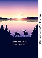 ερημιά , λίμνη , έλαφος άλκη , ηλιοβασίλεμα , άγρια ζωή , περιπέτεια
