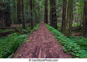 ερυθρόδενδρο , ακτοπλοϊκός , δάσοs , καλιφόρνια