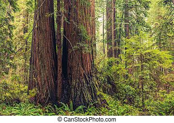 ερυθρόδενδρο , ακτοπλοϊκός , δάσοs