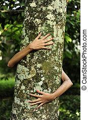ερωτευμένα , με , nature:, γυναίκα , αγαπώ , ένα , δέντρο , μέσα , ο , δάσοs