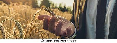 ευρύς , βλέπω , εικόνα , από , επιχειρηματίας , προσεκτικά , κράτημα , ωρίμαση , αυτί , από , σιτάρι