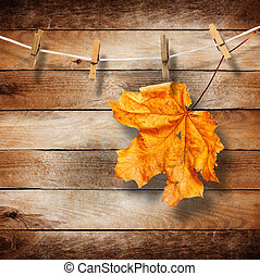 ευφυής , φύλλα , γριά , φόντο , ξύλινος , φθινόπωρο