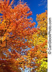 ευφυής , φύλλα , δέντρα , γραφικός , πέφτω
