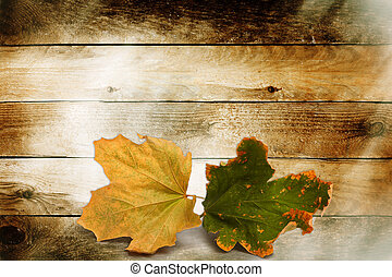 ευφυής , φύλλα , φόντο , ξύλινος , φθινόπωρο