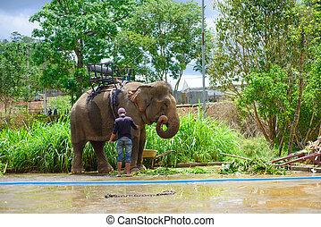 ζούγκλα , ελέφαντας