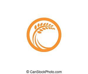 ζωή , φόρμα , ο ενσαρκώμενος λόγος του θεού , εικόνα , μικροβιοφορέας , υγιεινός , σιτάρι , γεωργία