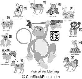 ζωδιακός , δώδεκα , μαϊμού , κινέζα , εικόνα , έτος , καινούργιος