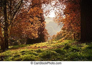 ζωηρός , εύχυμος , φθινόπωρο , μπογιά , διαμέσου , δάσοs , φύλλωμα , πέφτω , βλέπω
