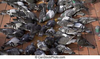 ζώο , πουλί , γλώσσα συνεννόησης