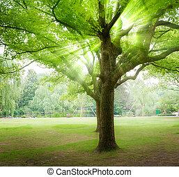 ηλιαχτίδα , διαμέσου , χύνομαι , δέντρα , δάσοs
