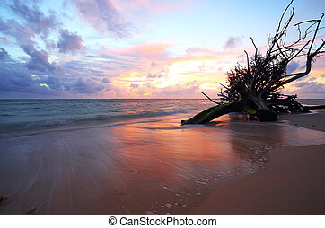 ηλιοβασίλεμα , άγονος αγχόνη , μέσα , ο , θάλασσα , σε , naiyang, παραλία , phuket , σιάμ