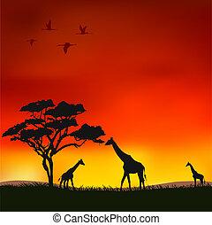 ηλιοβασίλεμα , αφρικανός