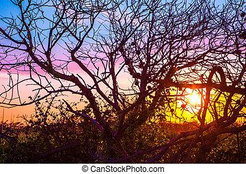 ηλιοβασίλεμα , δέντρα