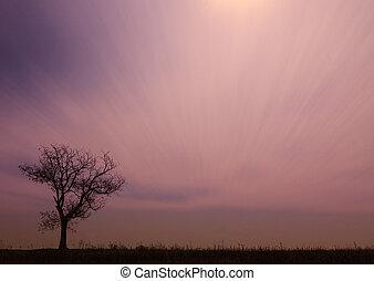 ηλιοβασίλεμα , δέντρο , μοναχικός