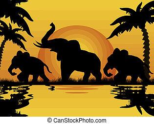 ηλιοβασίλεμα , ελέφαντας