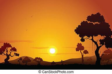 ηλιοβασίλεμα , ζούγκλα , βλέπω