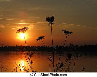 ηλιοβασίλεμα , με , άγριος , καρότο