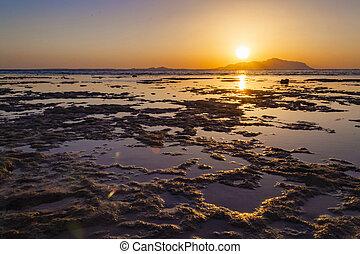 ηλιοβασίλεμα , πάνω , νησί , αραβία , αίγυπτος , θάλασσα , κόκκινο , tiran, saudi , θαυμάσιος
