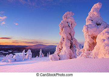 ηλιοβασίλεμα , πάνω , παγωμένος , δέντρα , επάνω , ένα , βουνό , levi, φινλανδικός , λαπωνία