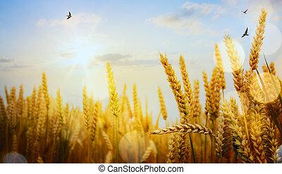 ηλιοβασίλεμα , τέχνη , αυτιά , κίτρινο , backdrop , πεδίο , σιτάρι , ωρίμαση