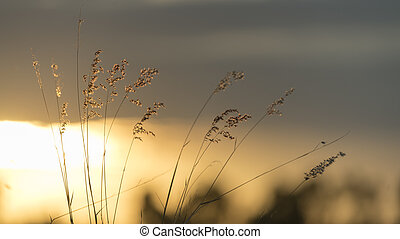 ηλιοβασίλεμα , φύση