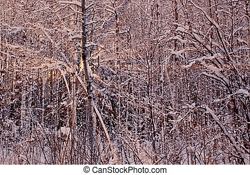 ηλιοβασίλεμα , χειμώναs , δάσοs