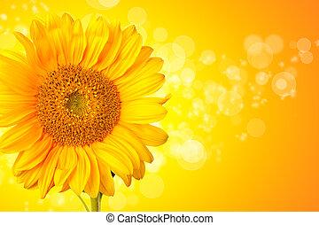 ηλιοτρόπιο , άνθος , αφαιρώ , λεπτομέρεια , φόντο , λαμπερός