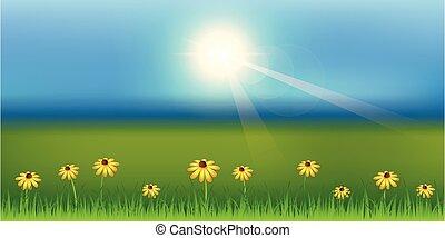 ηλιόλουστος , άνοιξη , μαργαρίτα , φόντο , λιβάδι , λουλούδι , πράσινο