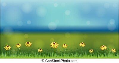 ηλιόλουστος , λουλούδι , πράσινο , άνοιξη , μαργαρίτα , λιβάδι , φόντο