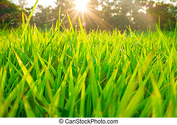 θέα , γρασίδι , φυσικός , πάρκο , δέντρα , πράσινο