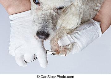θέμα , σκύλοs , μανικιούρ