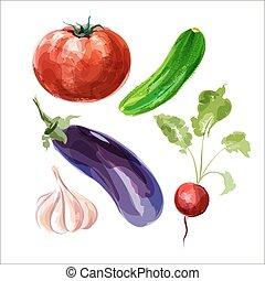 θέτω , vegetables., ραπανάκι , νερομπογιά , αγγούρι , μικροβιοφορέας , τομάτα , σκόρδο , μελιτζάνα