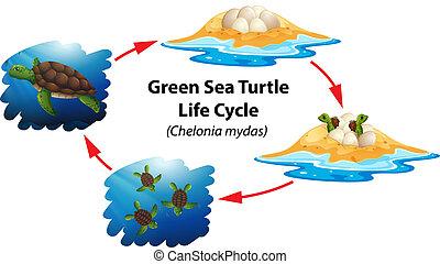 θαλάσσια χελώνα , ζωή , πράσινο , θάλασσα , κάνω ποδήλατο