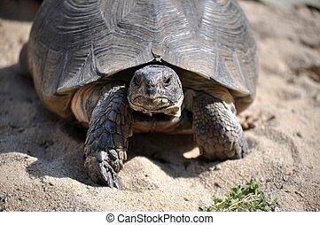 θαλάσσια χελώνα , φράζω