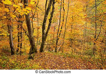 θεαματικός , δάσοs , τοπίο , πέφτω