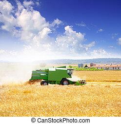 θεριζοαλωνιστική μηχανή είδος ακάρεως , αποθηκεύω , σιτάρι , δημητριακά