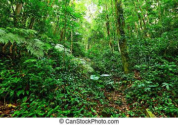 θερμότατος γραφική εξοχική έκταση , rainforest