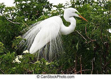 θερμότατος πουλί , μέσα , ένα , πάρκο , μέσα , florida