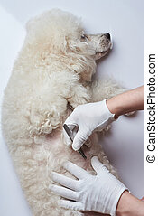ιατρικός , απόστρατος , επιθεώρηση , από , σκύλοs