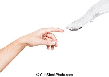 ιδιοκτήτηs , αβοήθητος 5 , σκύλοs