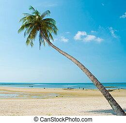 ινδική καρύδα αρπάζω με το χέρι , θάλασσα