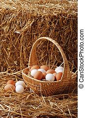 καλαθοσφαίριση , αυγά