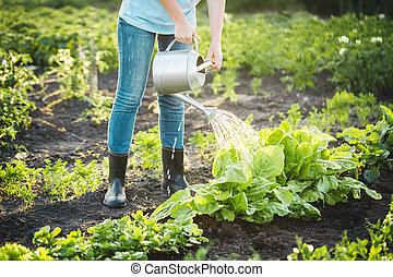 καλλιέργεια , plants., φιλικά , environmentally