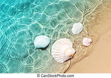 καλοκαίρι , αστερίας , κοχύλι , θάλασσα , water., παραλία