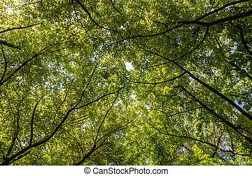 καλοκαίρι , δέντρα , φύλλωμα